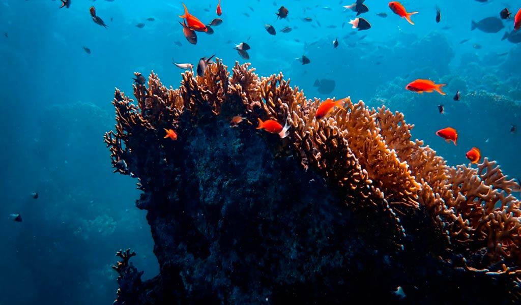 Blancpain мировой океан