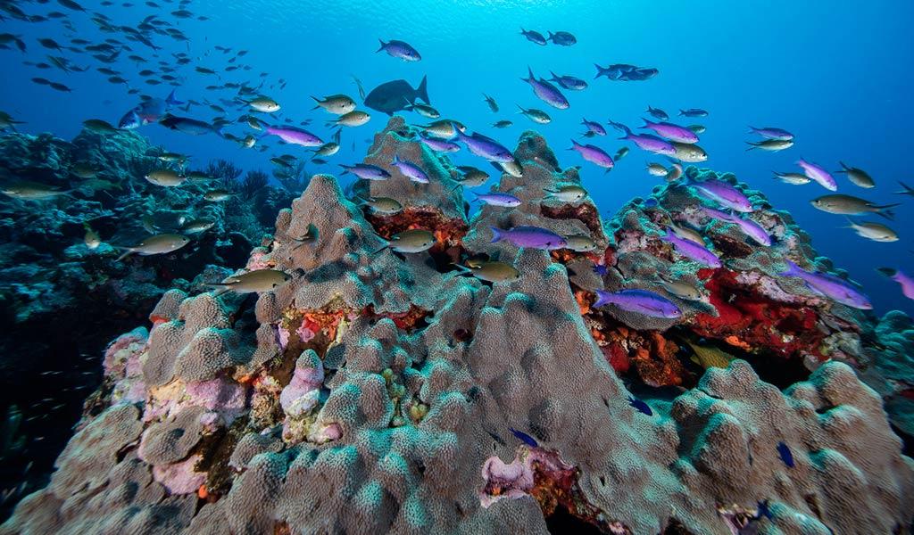 Природозащитная экспедиция Oceana и Blancpain