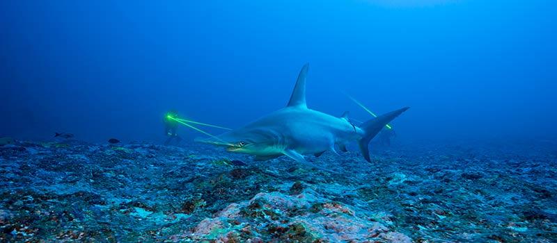 Лимитированная серия Bathyscaphe Mokarran: особые часы, посвященные защите гигантской акулы-молота