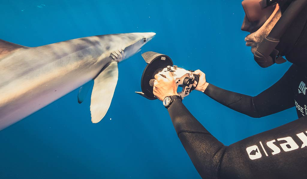 Экология океана лимонная акула